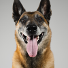 Pawbits - Joint Support Mature Dog