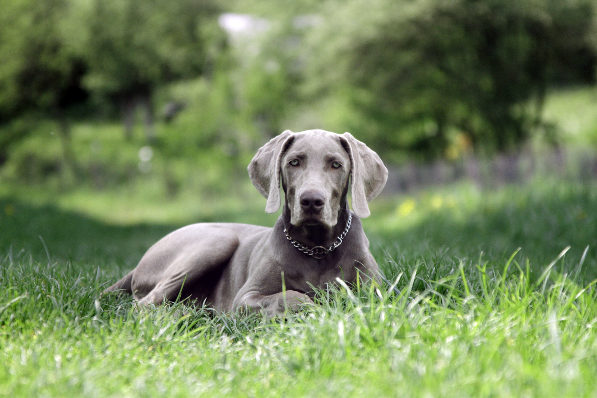 Dog sitting down in grass used for pawbits calming for dogs pet food supplements pinned image