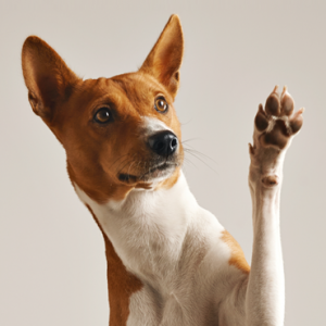Pawbits Calming for Dogs pet food supplements mascot