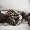 Pawbits - Pinned Image - Cat Lying Down Joint Support for cats