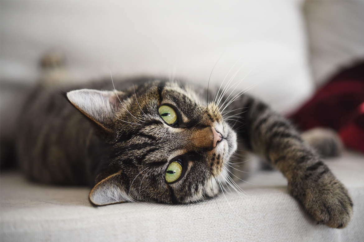 How to keep cats safe and happy at home
